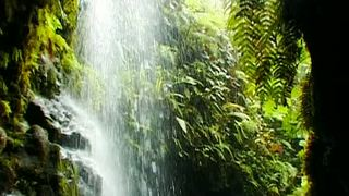 In this Episode we trek through the jungles of Hawaii and  retrace Charles Darwin's footsteps in the Galapagos Islands.We